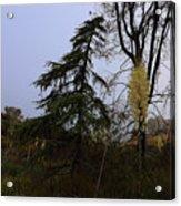 Yucca Filamentosa Rainy Day In Malibu Acrylic Print