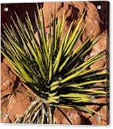 Yucca Five Acrylic Print