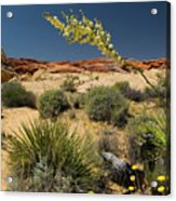 Yucca In The Valley Of Fire Acrylic Print