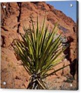 Yucca Acrylic Print