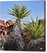 Yucca Pair Acrylic Print