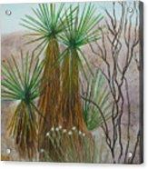 Yucca Stand Acrylic Print