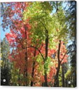 Yummy Fall Colors Acrylic Print by Sandy Tracey