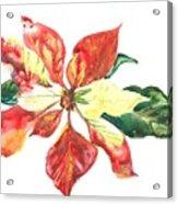 Yupo Poinsettia Acrylic Print