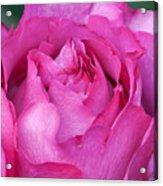 Yves Piaget Rose Acrylic Print