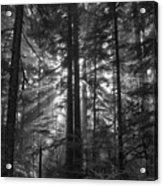 z Acrylic Print