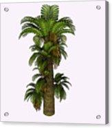 Zamites Tree Acrylic Print