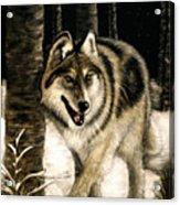 Zane Gray Wolf Acrylic Print