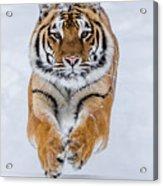 Zeal Acrylic Print