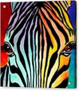 Zebra - End Of The Rainbow Acrylic Print