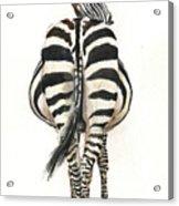Zebra Back Acrylic Print