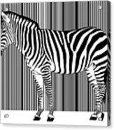 Zebra Barcode Acrylic Print