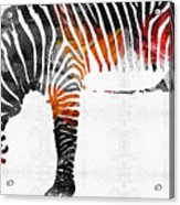 Zebra Black White And Red Orange By Sharon Cummings  Acrylic Print