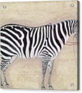 Zebra, C1620 Acrylic Print