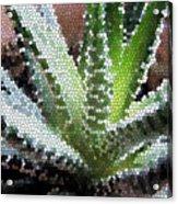 Zebra Cactus  Acrylic Print