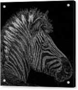 Zebra Computer Drawing Acrylic Print