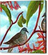 Zebra Doves Or Barred Dove Birds #309 Acrylic Print