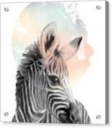Zebra // Dreaming Acrylic Print