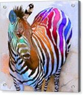 Zebra Dreams Acrylic Print