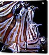 Zebra Fish Acrylic Print