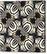 Zebra IIi Acrylic Print