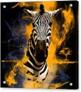 Zebra In Africa Acrylic Print