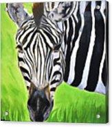 Zebra In The Wild Acrylic Print