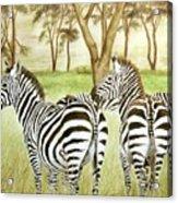Zebra Pals Acrylic Print