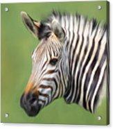 Zebra Portrait Acrylic Print by Trevor Wintle