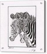 Zebra Series 6 Acrylic Print