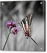 Zebra Swallowtail Butterfly And Stripes Acrylic Print