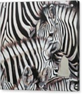 Zebra Triptyche Left Acrylic Print