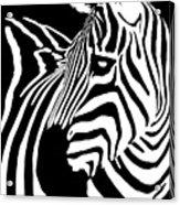Zebra Works Acrylic Print