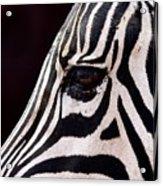 Zebras Eye Acrylic Print