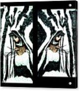 Zebras Eye - Studio Abstract  Acrylic Print