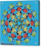 Zeerkl Of Angelfish Acrylic Print