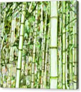 Zen Bamboo Forest Acrylic Print