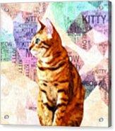 Zen Cat Acrylic Print