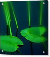 Zen Photography Green  Acrylic Print