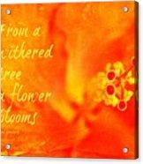 Zen Proverb 3 Acrylic Print