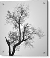 Zen Tree Acrylic Print