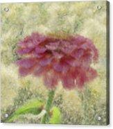 Zinnia Impression Acrylic Print