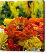 Zinnias With Sunflowers Acrylic Print