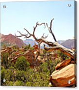 Zion Hike 1 View 4 Acrylic Print