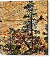 Zion National Park Acrylic Print