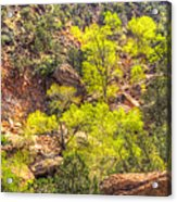 Zion National Park Small Tributary Of The Virgin River Acrylic Print