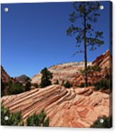 Zion Park Colors And Texture Acrylic Print