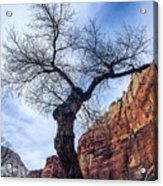 Zion Tree Woman Acrylic Print