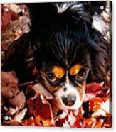 Zoeh - Look Into My Eyes Acrylic Print