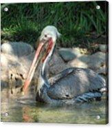 Zoo 28 Acrylic Print